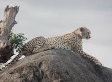 3 Days Best of Tanzania Safari Tour