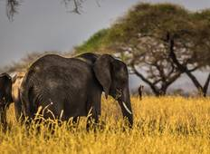 5 Days Luxury Ruaha National Park Safari Tour
