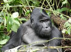 10 days Experience Uganda's Exclusive Gorillas and Wildlife Tour