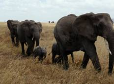 3 Days Tanzania Private camping Safari Tour