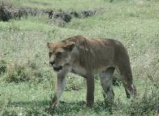 4-DAY Masai Mara Small Group Safari  Tour