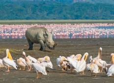 4 Days Masai Mara and Lake Nakuru Safari-Kenya Safari, Tour