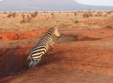 9 Days Kenyan National Park Safari Tour