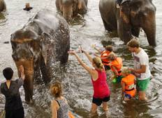 Babysitting an Elephant at River Kwai  Tour