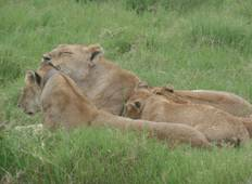 7-Day Budget Kenya Safari  Tour