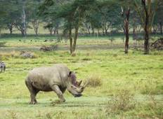 8-Day Luxury Kenya Wildlife Safari -  Tour