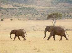 3 DAY Masai Mara Air Package - 3 Days Tour