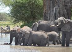 Discover Tanzania from Tarangire to Serengeti National Park Tour