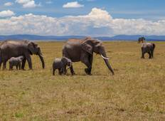 Tsavo,Amboseli, Masai Mara,Aberdare, Lake Nakuru and Samburu Tour
