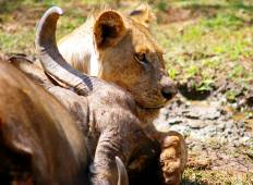 Kafue 6 days / 5 nights Budget Safari  Tour