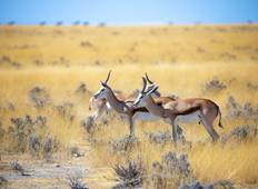 3 Days Etosha National Park  Camping Safari Tour