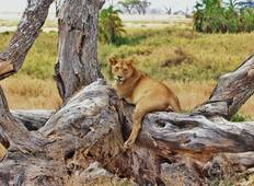 4 Day Safari (Tarangire / Ngorongoro / Serengeti) Tour