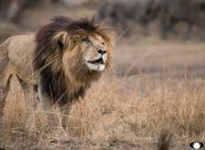 Photographic Safari (Masai Mara National Park, Naivasha and Amboseli National Park) Tour