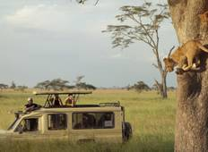 4 Days Tanzania Safari Tour