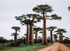 The Most Famous Baobab Avenue - 5 Days Tour