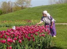 Holland Michigan Tulip Festival Tour