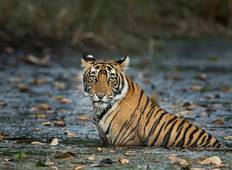 5 Days Golden Triangle Tour with Ranthambore Tour