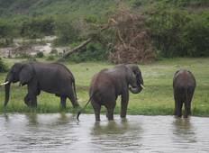 Queen Elizabeth und Lake Mburo Nationalpark - 5 Tage Rundreise