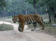 Bardia Jungle Safari with Tiger Encounter Tour (Kathmandu to Kathmandu)  Tour