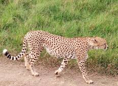 4 Days Lake Manyara, Serengeti and Ngorongoro Group Tour from Arusha Tour