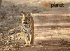 Central India\'s Wildlife & Safari Tour Tour