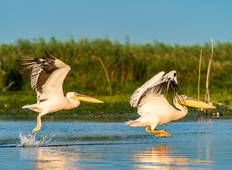 Explore the Danube Delta Tour