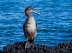 Galapagos Encounter - Archipel I (Itinerary D) Tour