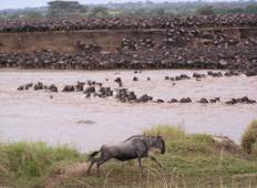 10 Days Tanzania Great Wildebeest Migration Mara River Crossing  Tour