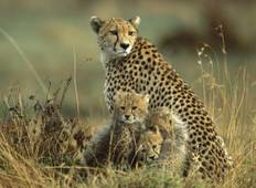 5 Days Wildlife Adventure Kenya Safari Tour