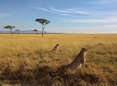 3-Day Maasai Mara National Reserve Game Drive Tour