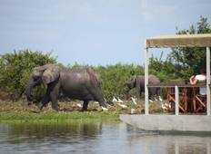 7 Days Selous, Ruaha & Mikumi Safaris Tour