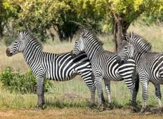 4 Days Ruaha National Park Safari Tour