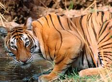Golden Triangle Tour with Ranthambore (Samai Madhopur ) Tour