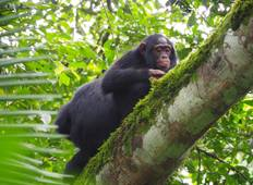 Uganda Game Safari with Primates Tour