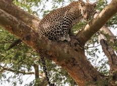 Murchison Falls & Kidepo Valley Safari Tour