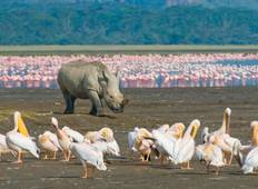 6 Day Mara, Lake Nakuru & Amboseli Midrange Safari Tour