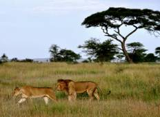5 Days Magical Safari Tour