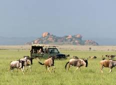 5 days Classic Tanzanian Safari Tour
