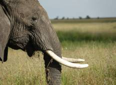 6 days Classic Tanzanian Safari  Tour