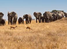 7 Days Tanzania Safari With Cultural Tour Tour