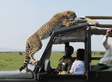 8 days Safari - Northbound Wildlife Migration (July to October only) Tour