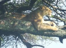Safari Itinerary - Lake Manyara, Lake Eyasi, Serengeti, Ngorongoro And Usambara Tour