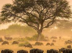5 Days group camping tour to the best wildlife parks in Africa Tour