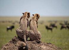 3 Days tour to africa\'s best parks (Serengeti & ngorongoro crater) Tour