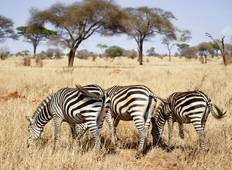 Serengeti & Ngorongoro Safari - 3 Days Tour