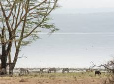 4 Days Kenya Big 5 Safari To  Masai Mara and Lake Nakuru  Tour