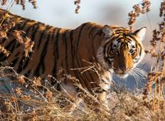 Golden Triangle (with Ranthambore) - 5 Days Tour