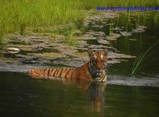 Bardia National Park Tour Tour