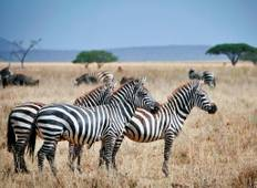 3 Day Crater Tour Lake Manyara and Tarangire National Park Tour