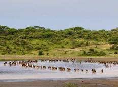 7 Day Safari to See Great Migration & Lake Ndutu Tour